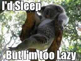 Koala Meme Generator - meme creator i d sleep but i m too lazy meme generator at