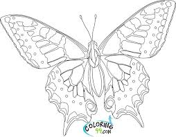 coloring page butterfly monarch coloring pages butterfly life cycle of a butterfly coloring page