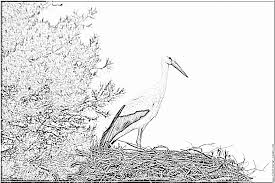 stork nest coloring pages printable u0026 free white stork