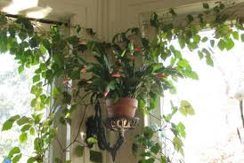plant indoor plants names endearing what are the names of indoor