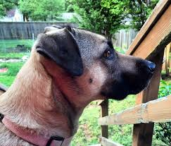 preventing dog reactivity with a barrier eileenanddogseileenanddogs