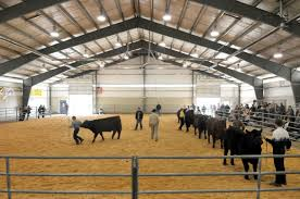 Show Steer Barns Spokane Junior Livestock Show A Picture Story At The Spokesman