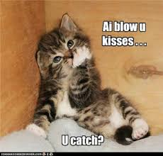 Cute Cat Memes - i blow you kisses and 20 more funny and silly cat memes love