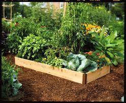 raised garden beds for kids gardening ideas