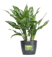 beautiful tropical indoor plants u2013 home design and decor