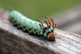 backyard bugs u2014 native nurseries