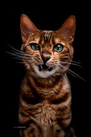 best 25 cat photography ideas only on pinterest animal