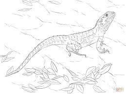 australian water dragon download coloring pages animal