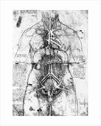 Leonardo Da Vinci Human Anatomy Drawings Leonardo Da Vinci Page 2