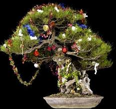 make your bonsai part of your bonsai outlet