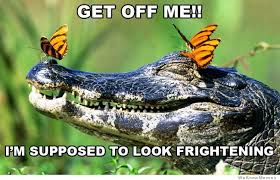 Crocodile Meme - i m supposed to look frightening weknowmemes
