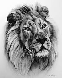 best pencil drawing of a lion google search tattoos