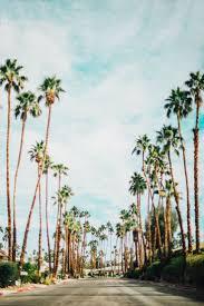 best 25 california palm trees ideas on pinterest palm tree photo diary palm springs ca