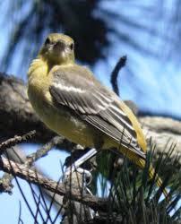 wild birds unlimited june 2014