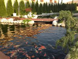 koi pond some inspiring koi pond design ideas yo2mo com home
