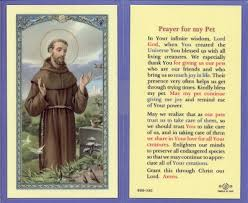 pet prayer prayer holy card