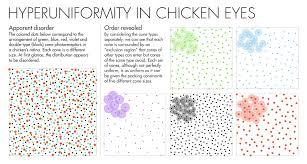 hyperuniformity found in birds math and physics quanta magazine