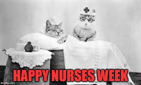 Nurses Week Memes - cat nurse imgflip