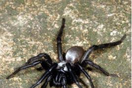 Are Spiders Attracted To Light How To Keep Spiders Out Of Your Home London Evening Standard