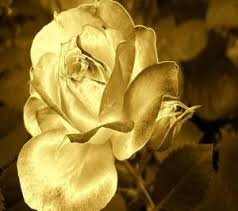 Golden Roses Download Free Golden Rose Wallpapers For Your Mobile Phone By