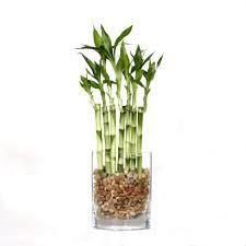 bonsai indoor plants garden plants u0026 flowers the home depot