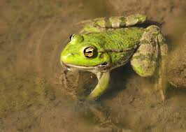 frogs animals used for experiments animal facts peta kids