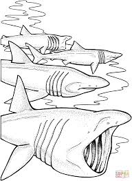 basking shark coloring pages free coloring pages
