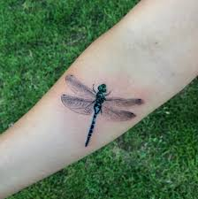 45 fascinating dragonfly designs tattooblend