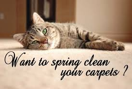 how to spring clean your house want to spring clean your house for summer and get the carpets done