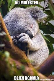 Meme Generator Koala - memes de koalas tiernos galeria 2 imagenes graciosas