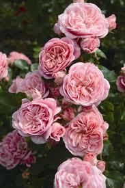 316 best fiori images on pinterest floral arrangements flower