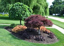best trees for front yard best backyard trees tulip tree small trees