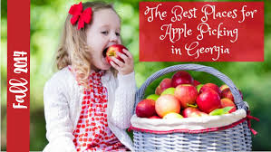 10 best places for apple picking in ga w map apple festivals