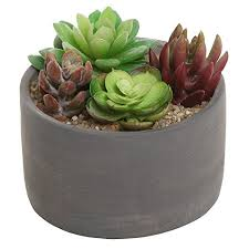 amazon succulents small modern round indoor gray cement flower planter pot outdoor