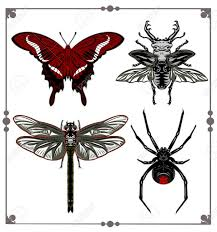 a set of images of insects beetle dragonfly butterfly spider