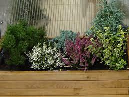 herbstbepflanzung balkon herbstbepflanzung für balkonkästen gartentipps