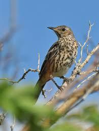 Utah birds images Utah birders birding blog utah birds utah birding utah bird JPG