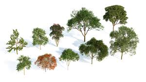 laubwerk plants kit 3 for 3ds max maya cinema 4d sketchup v ray