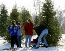 big tree plantation christmas trees and landscape trees morrow