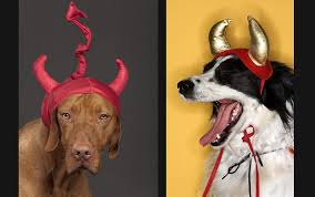 Expensive Halloween Costume 10 Outrageously Expensive Halloween Costumes Pets Gobankingrates