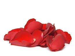 Rose Petals Rose Petals Magick 365