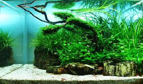 japanese aquarium fish tank japanese fish tank exceptional image concept natural