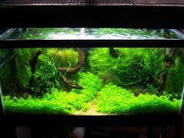 adventures in aquascaping