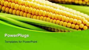 corn powerpoint templates crystalgraphics