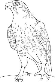 falcon bird coloring pages animal coloring pages of