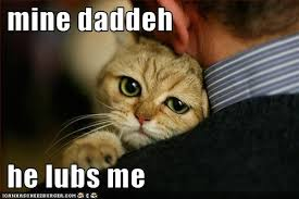 Happy Cat Meme - lol cat s daddy loves her cat pause