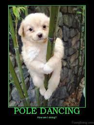Dancing Dog Meme - 80 top funny dance memes