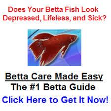 Beta Fish In Vase Betta Fish Vases