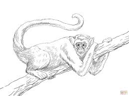 black handed spider monkey coloring free printable coloring