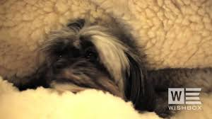 snoozer cozy cave dog bed now available in the uk u0026 europe youtube